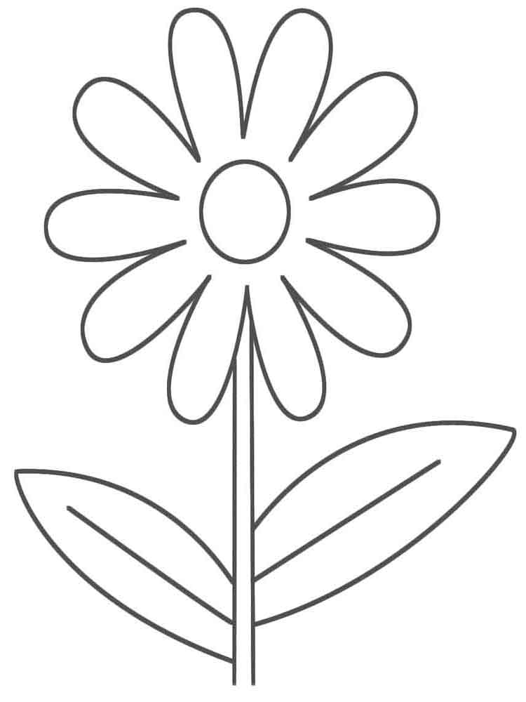 Chamomile coloring #6, Download drawings