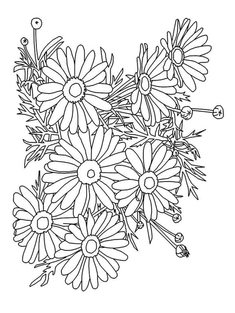 Chamomile coloring #7, Download drawings