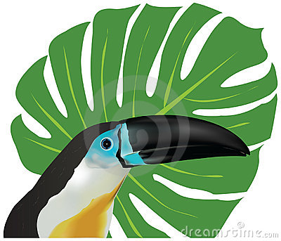 Channel-billed Toucan clipart #9, Download drawings