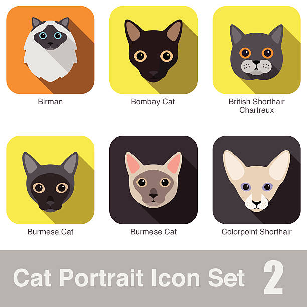 Chartreux clipart #12, Download drawings