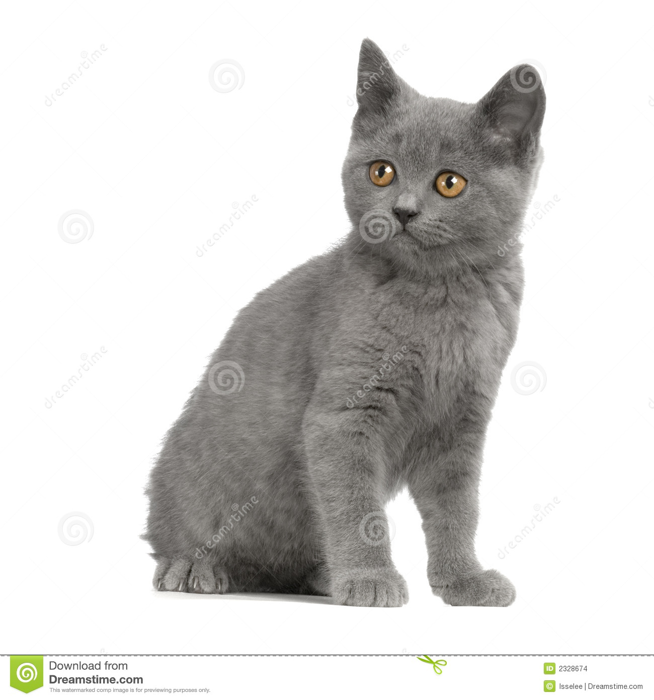 Chartreux clipart #4, Download drawings