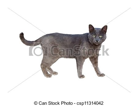 Chartreux clipart #2, Download drawings