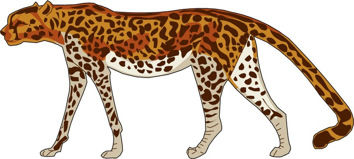 Cheetah clipart #2, Download drawings