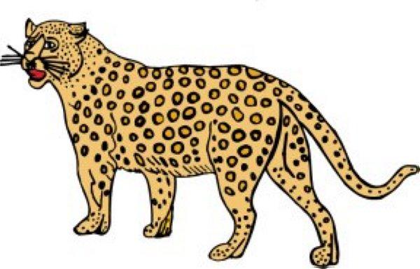 Cheetah clipart #8, Download drawings