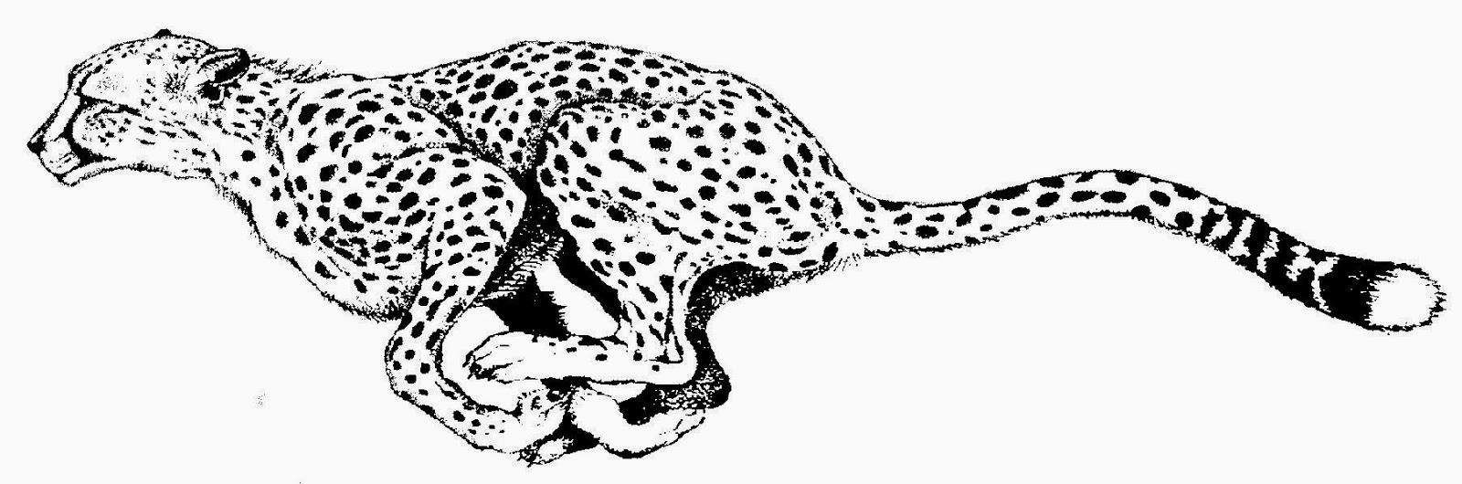 Cheetah clipart #3, Download drawings