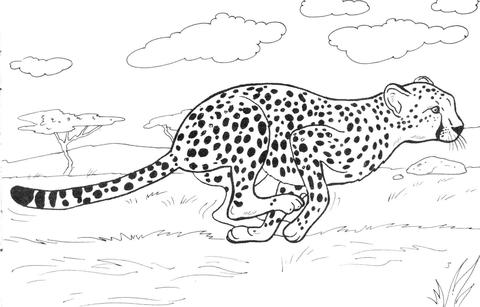 Cheetah coloring #15, Download drawings
