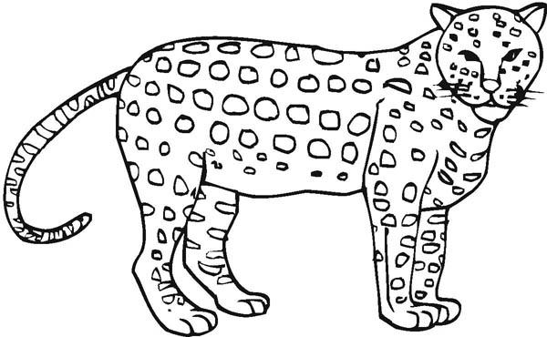 Cheetah coloring #3, Download drawings