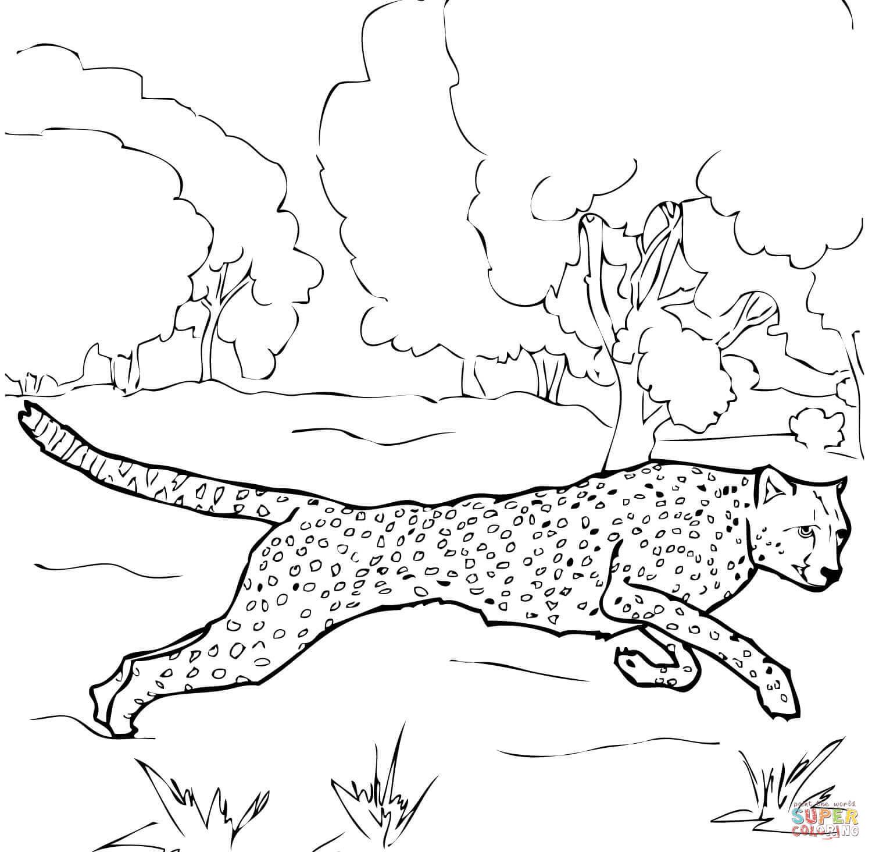 Cheetah coloring #7, Download drawings