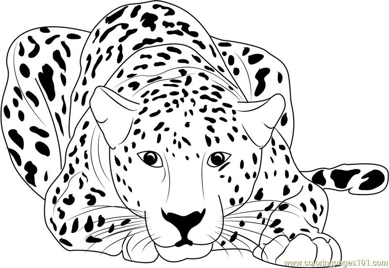 Cheetah coloring #11, Download drawings