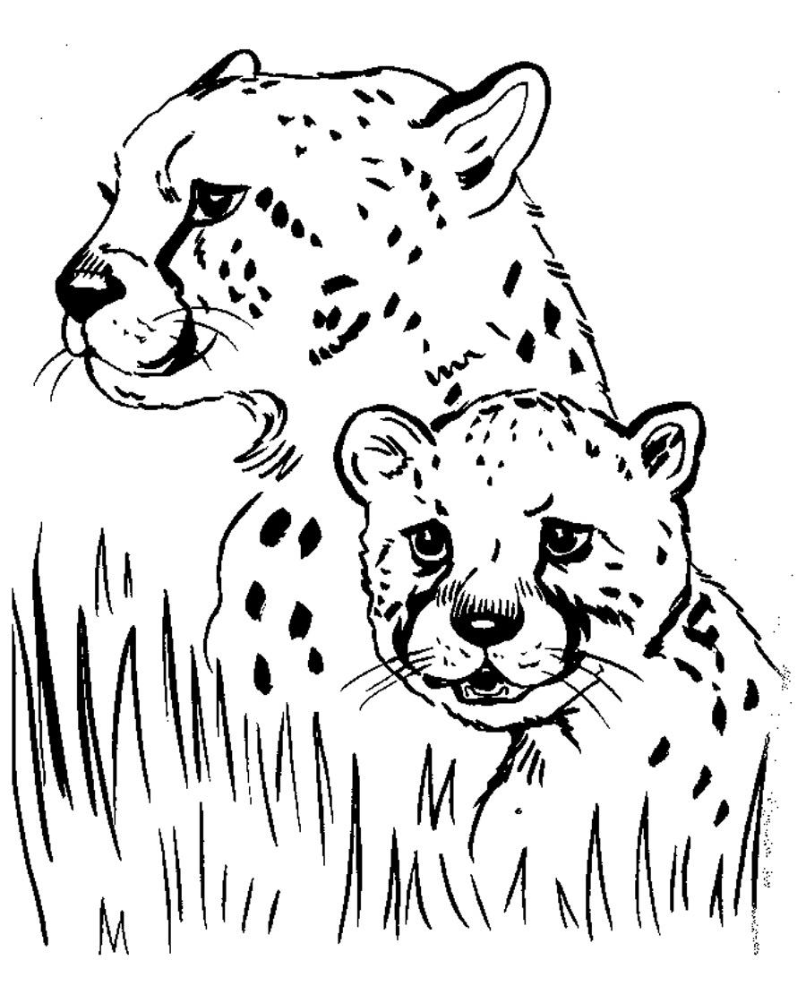 Cheetah coloring #13, Download drawings