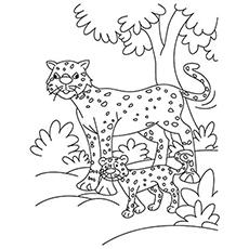 Cheetah coloring #4, Download drawings