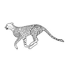 Cheetah coloring #8, Download drawings
