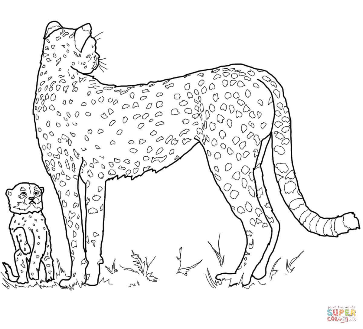 Cheetah coloring #10, Download drawings