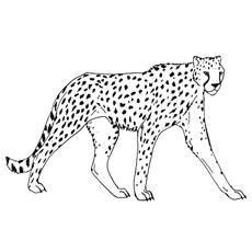 Cheetah coloring #19, Download drawings