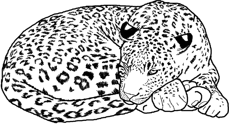 Cheetah coloring #12, Download drawings