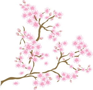 Cherry Blossom clipart #16, Download drawings