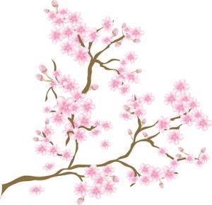 Sakura Blossom clipart #12, Download drawings