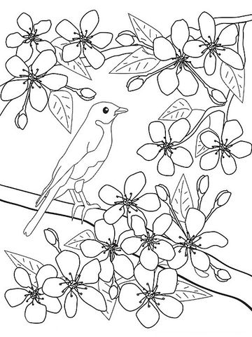 Cherry Blossom coloring #10, Download drawings