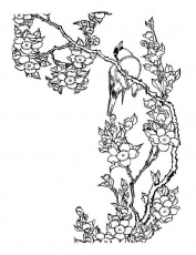 Cherry Blossom coloring #8, Download drawings