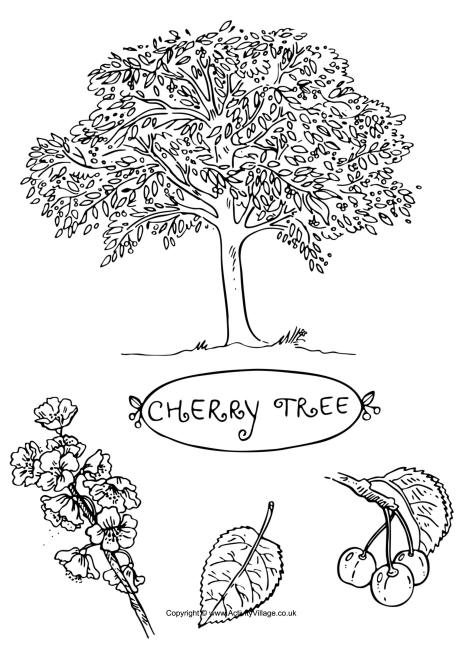 Cherry Tree coloring #16, Download drawings