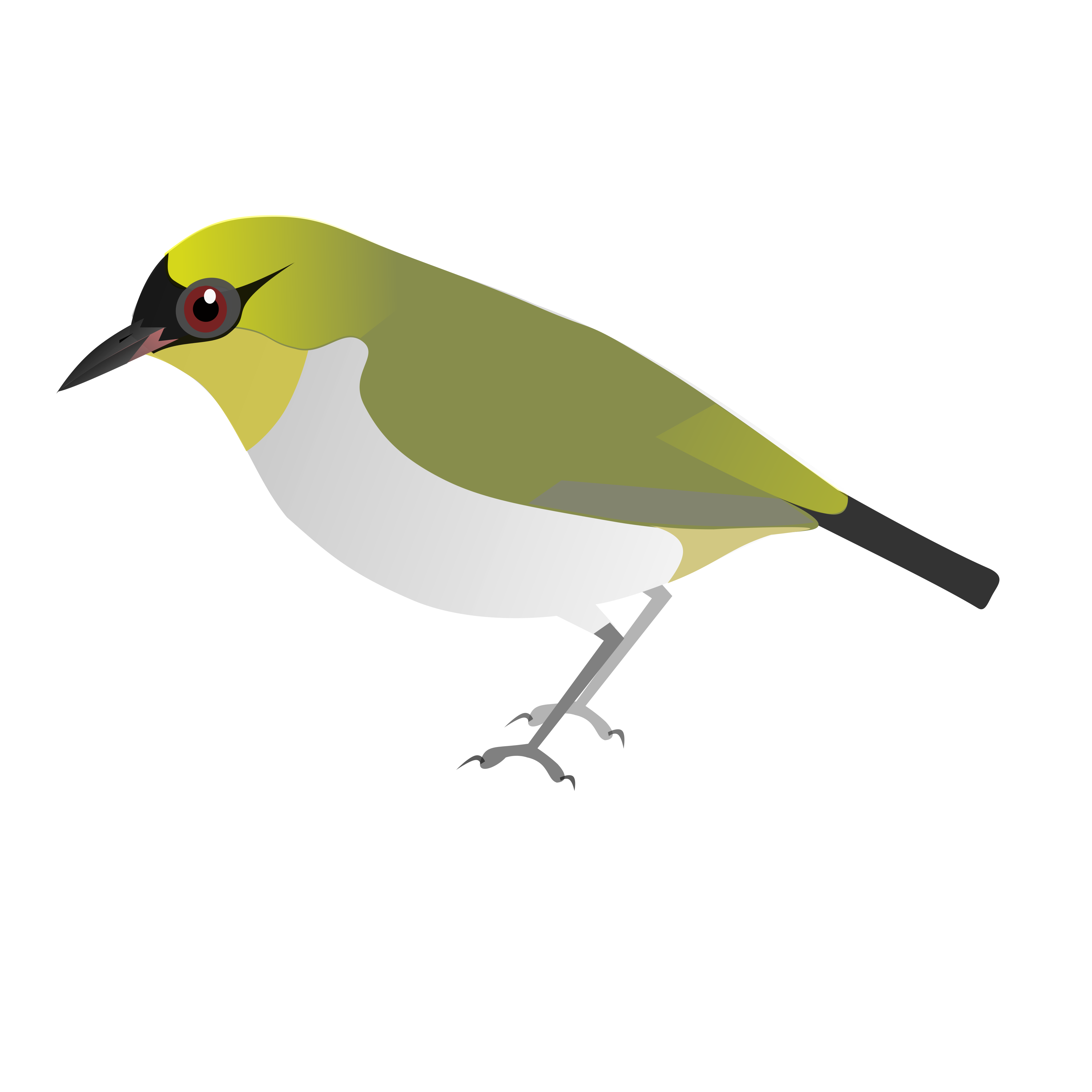 Chestnut-flaked White-eye svg #8, Download drawings