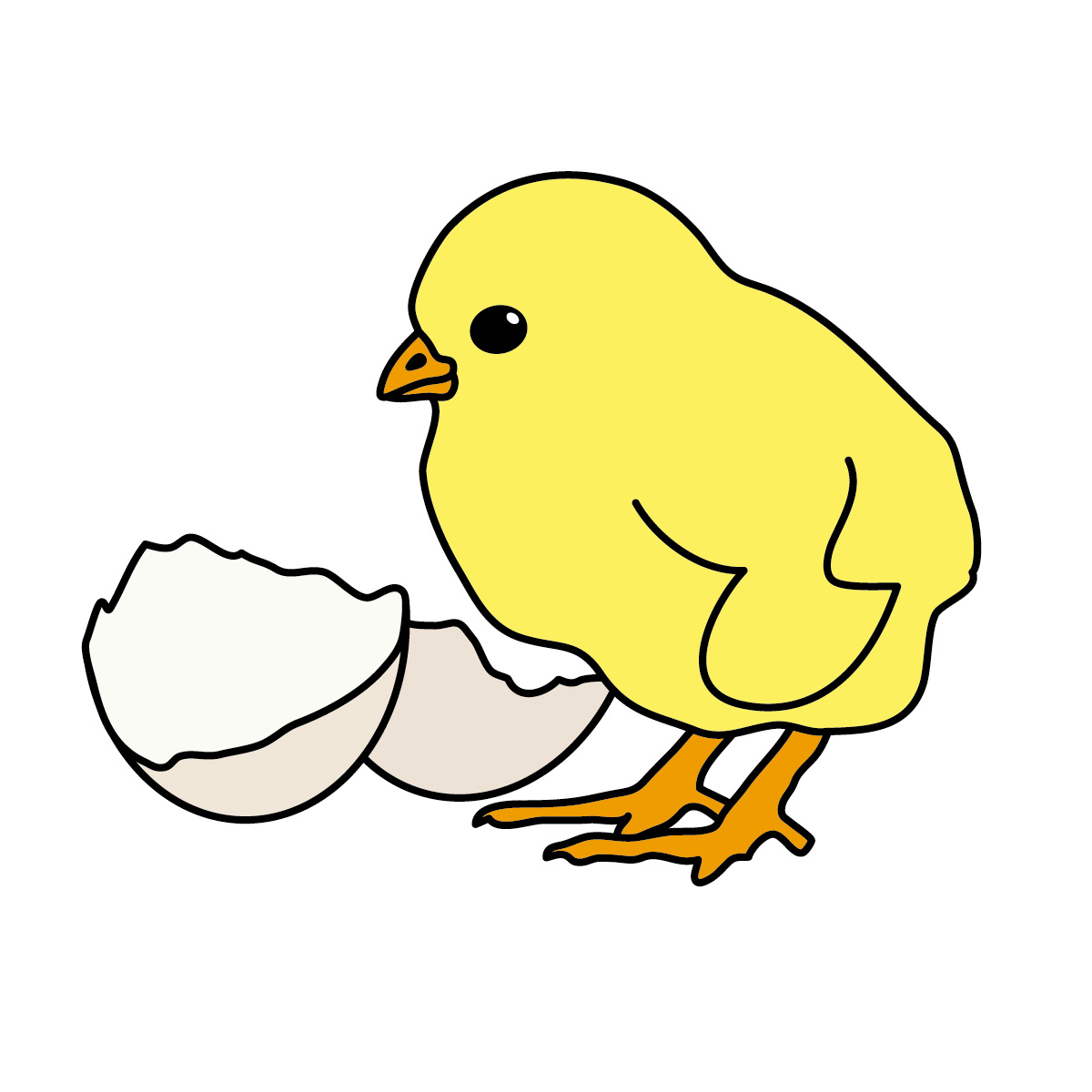 Chick clipart #15, Download drawings