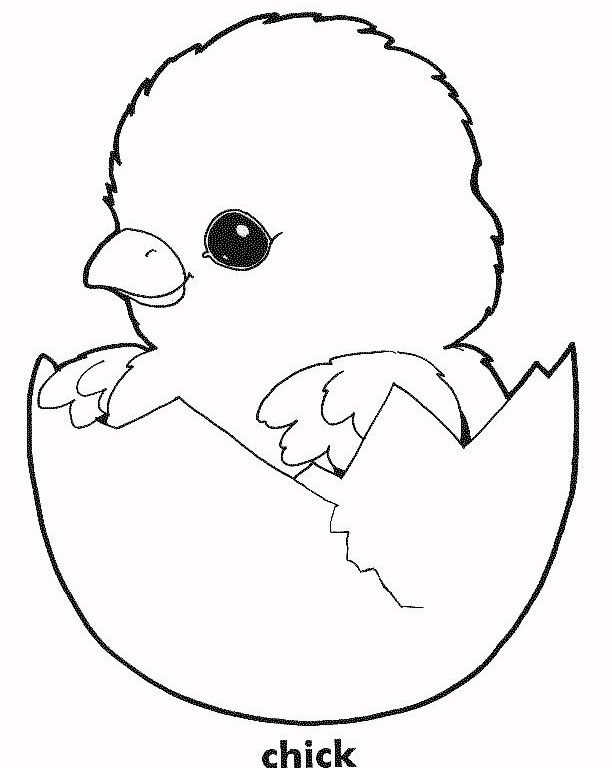 Chick coloring #14, Download drawings