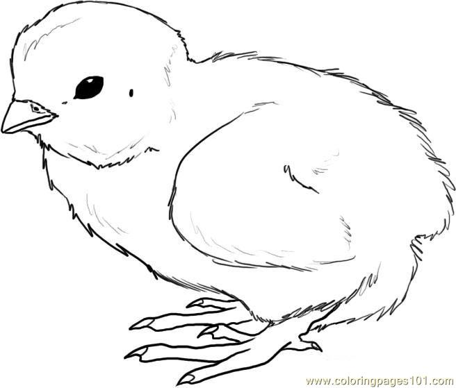 Chick coloring #3, Download drawings
