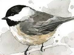 Chickadee clipart #13, Download drawings