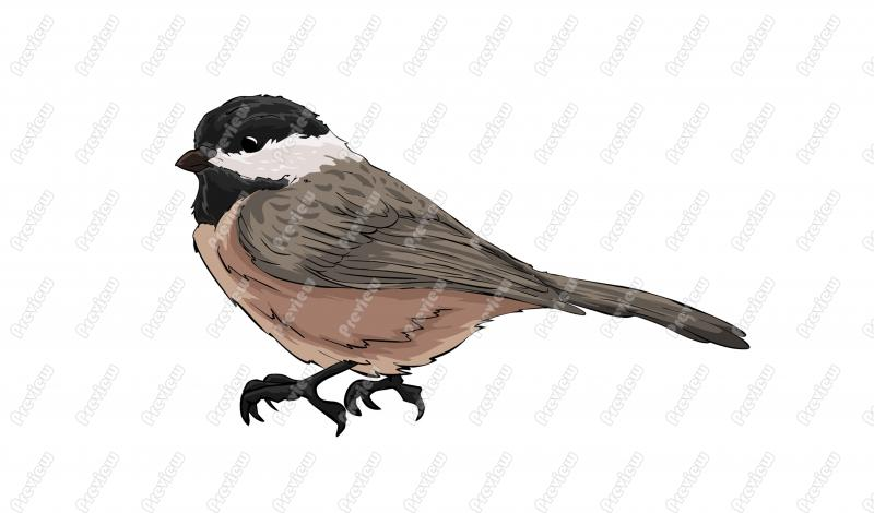 Chickadee clipart #10, Download drawings