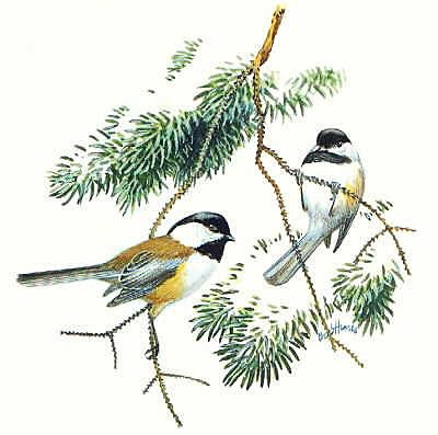 Chickadee clipart #5, Download drawings