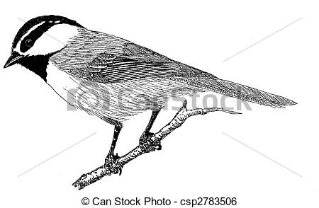 Chickadee clipart #7, Download drawings