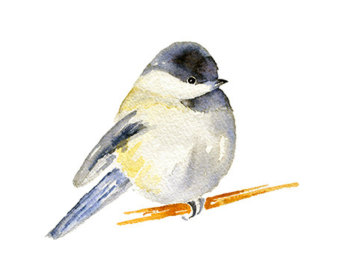 Chickadee clipart #3, Download drawings