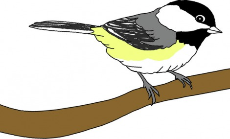 Chickadee clipart #14, Download drawings