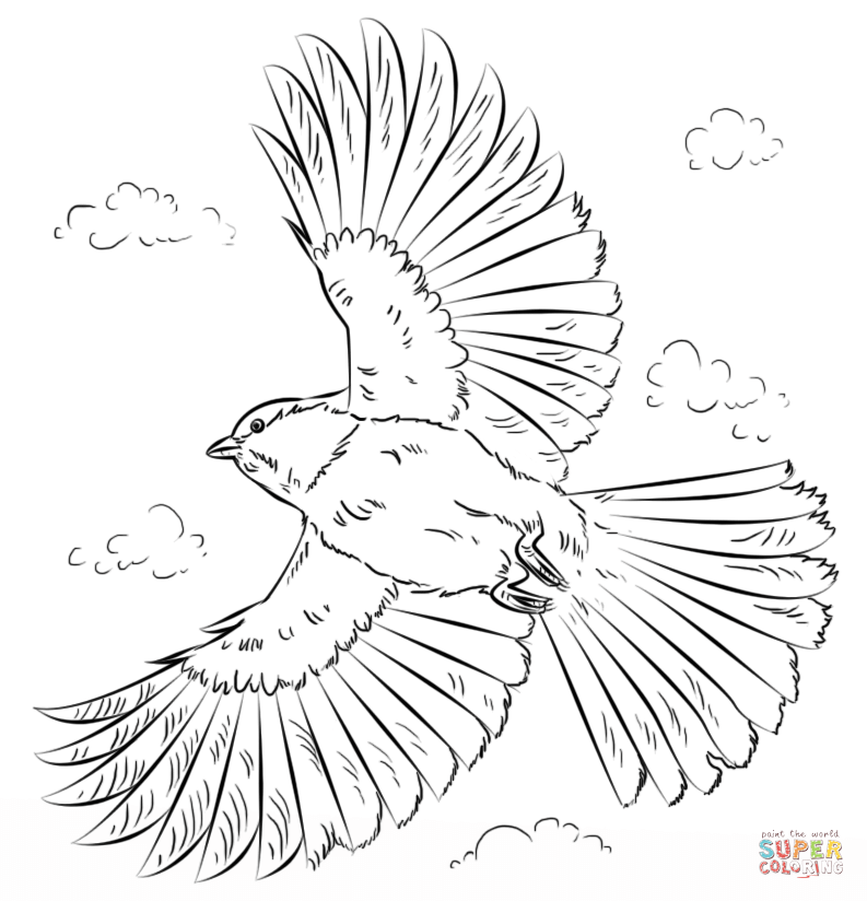 Chickadee coloring #5, Download drawings