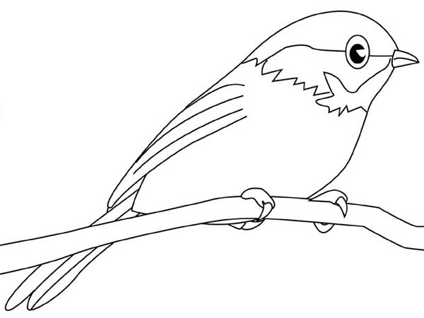 Chickadee coloring #15, Download drawings