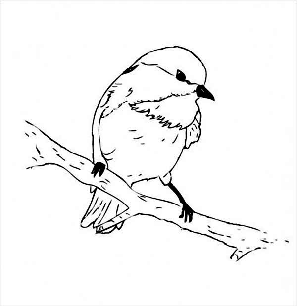 Chickadee coloring #14, Download drawings