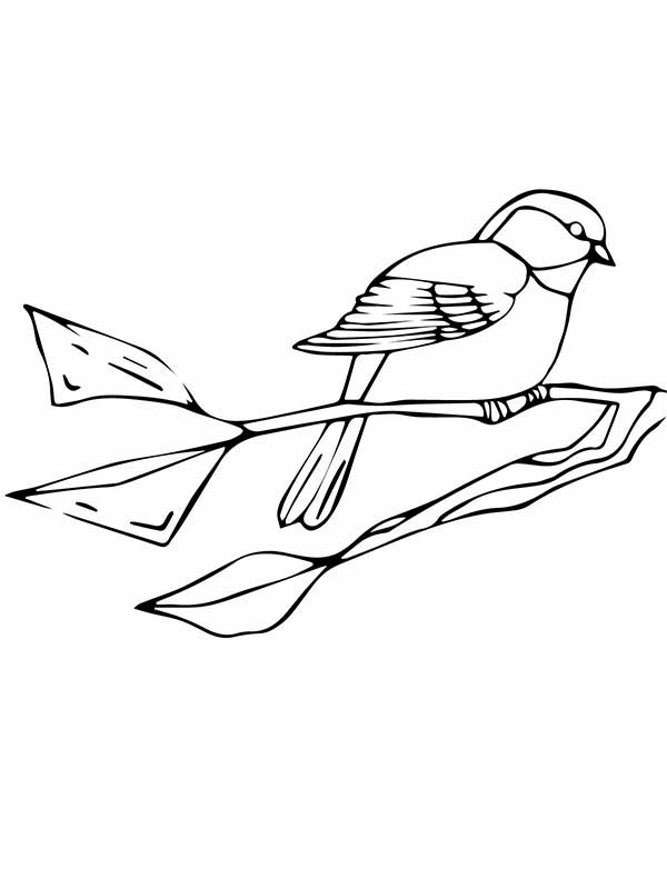Chickadee coloring #9, Download drawings
