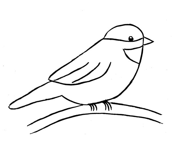 Chickadee coloring #10, Download drawings