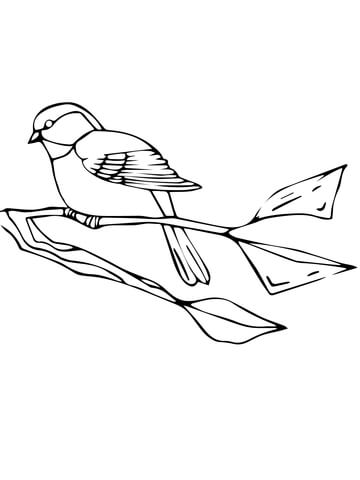 Chickadee coloring #6, Download drawings