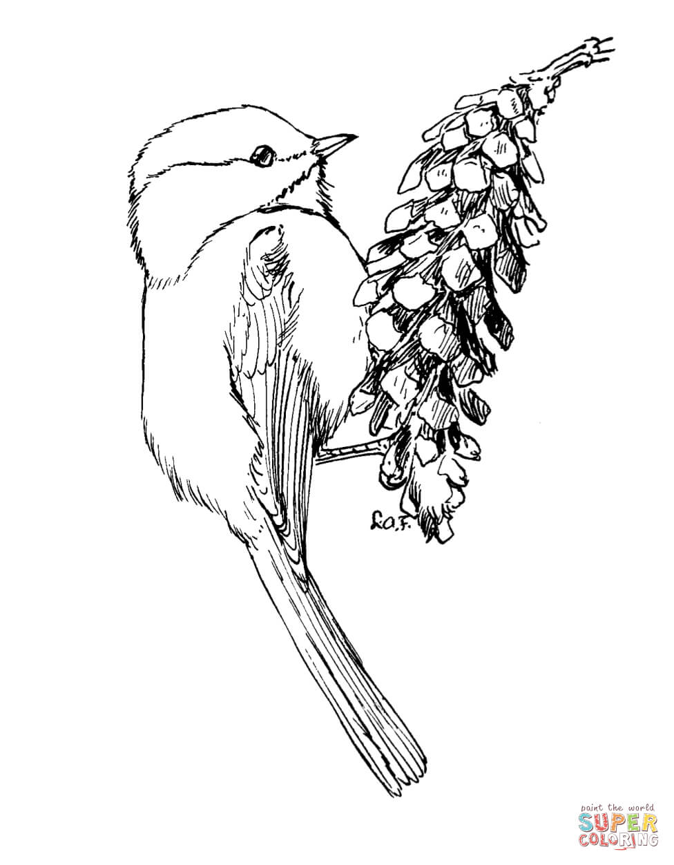 Chickadee coloring #12, Download drawings