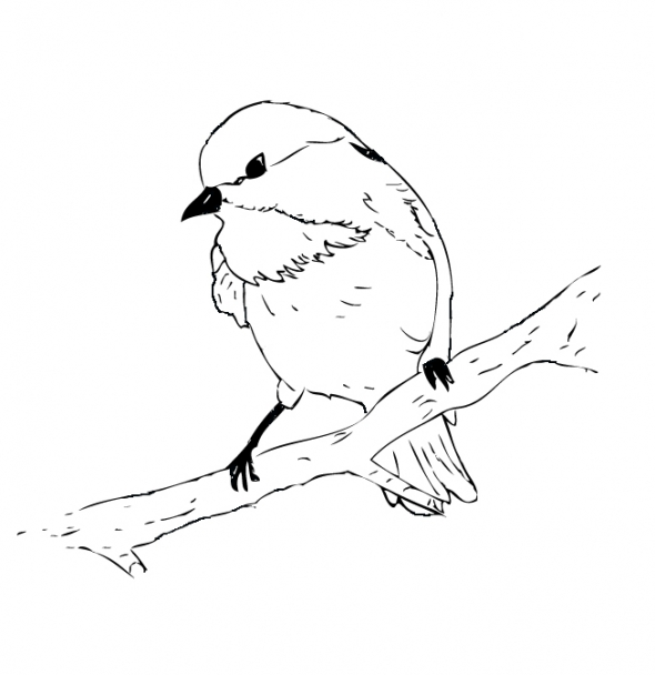 Chickadee coloring #16, Download drawings