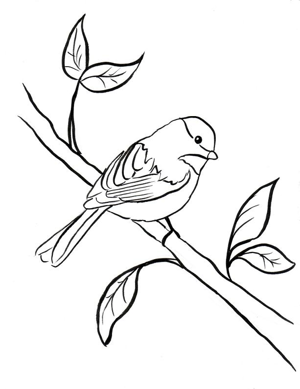 Chickadee coloring #1, Download drawings