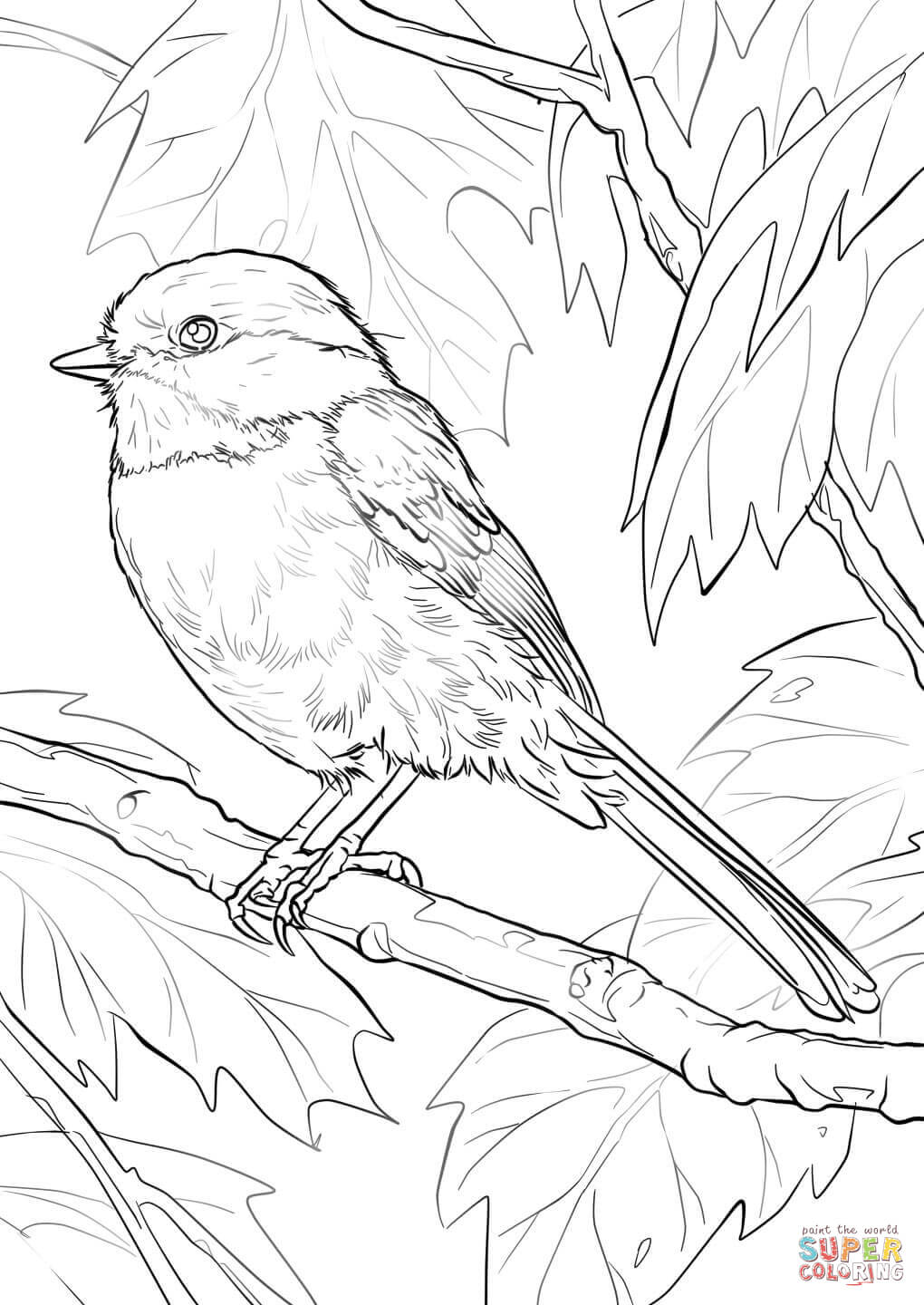 Chickadee coloring #4, Download drawings