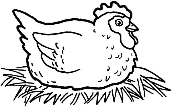 Chicken coloring #20, Download drawings