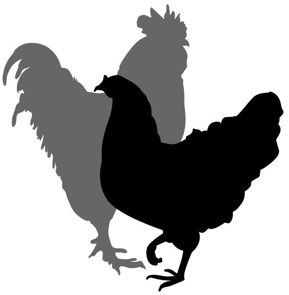 Chicken svg #6, Download drawings