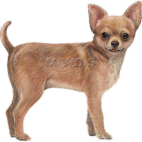 Chihuahua clipart #6, Download drawings
