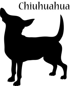 Chihuahua clipart #8, Download drawings