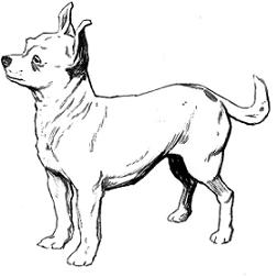 Chihuahua clipart #7, Download drawings