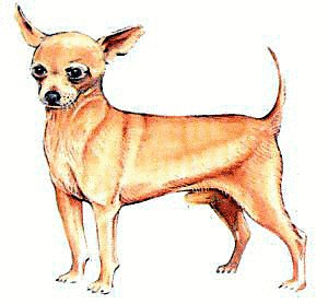 Chihuahua clipart #14, Download drawings